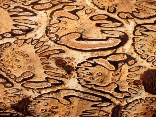 Medicinal wood