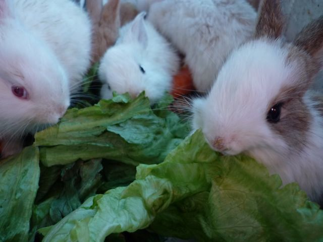 Bunnies - click on photo for video